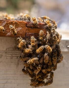 כוורת דבורים (צילום: Yaniv Nadav/Flash90)
