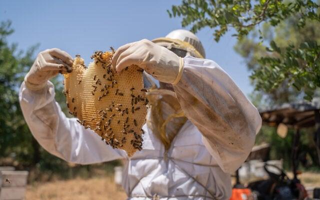 טיפול בכוורת דבורים סמוך לצריפין. יוני 2019