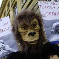 מחאה נגד ניסויים בבעלי חיים (צילום: AP Photo/CTK, Michal Krumphanzl)