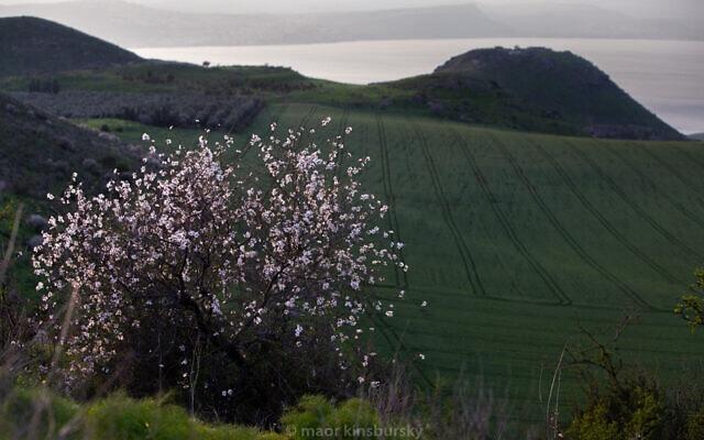 מבט על רמת הגולן (צילום: Maor Kinsbursky/Flash90)