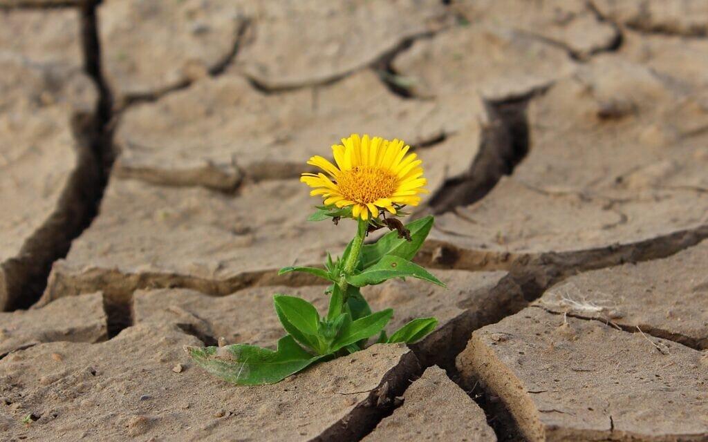פרח, אילוסטרציה (צילום: Image by klimkin from Pixabay)