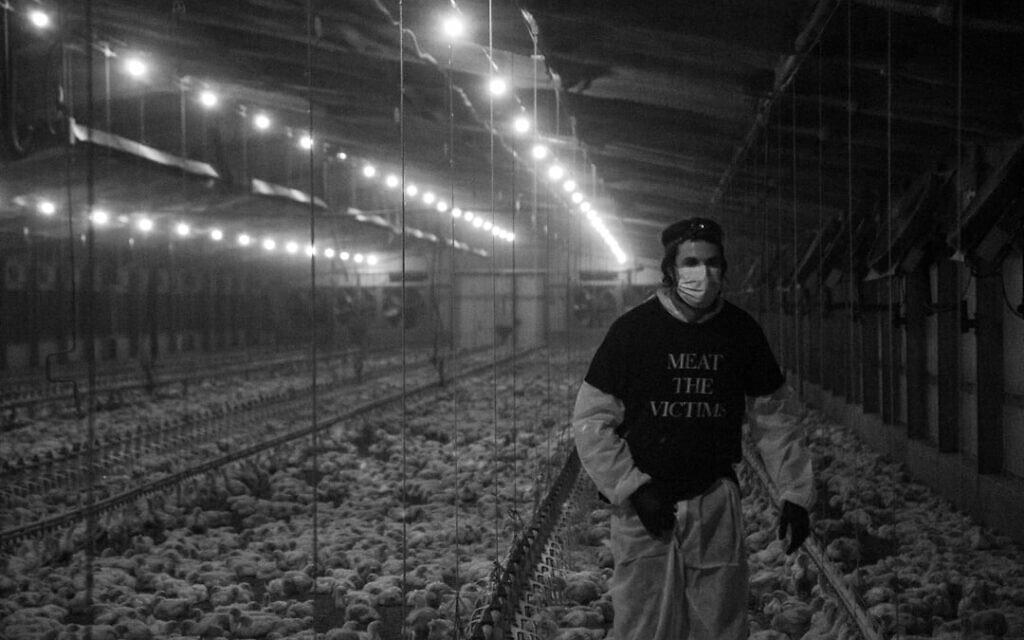 פעיל לזכויות בעלי חיים מתעד את הנעשה בלולים (צילום: Barak Mayer)