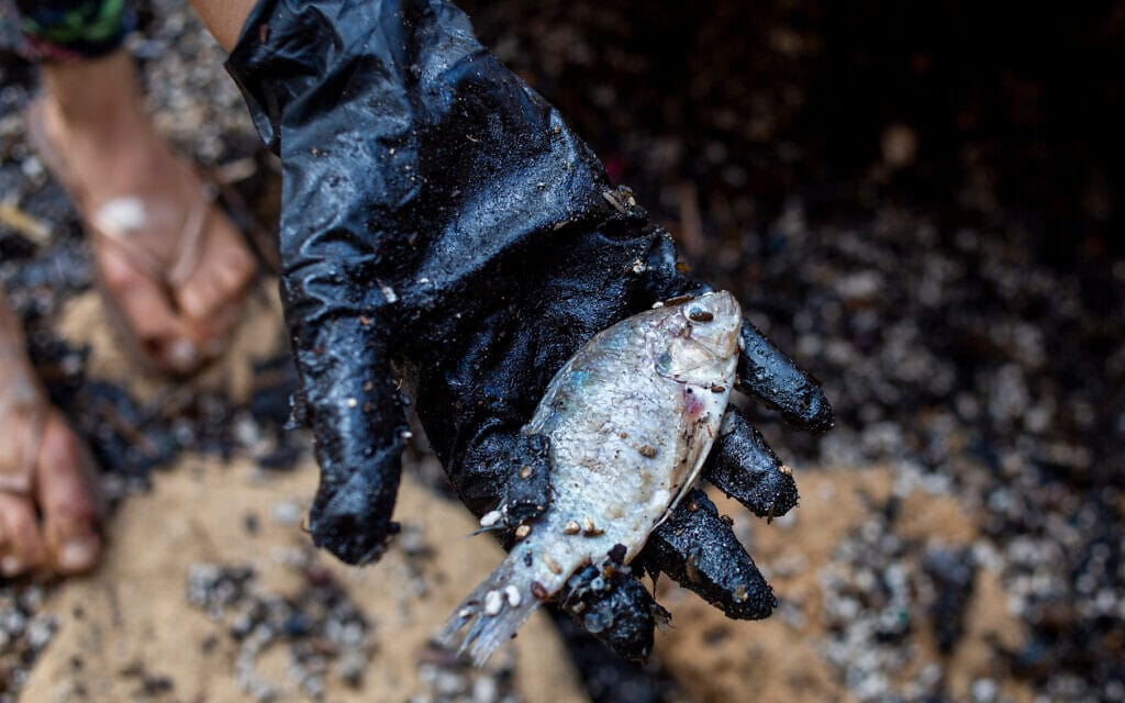 אישה מחזיקה דג מת לאחר שניקתה אותו מזפת, 20 בפברואר 2021 (צילום: AP Photo/Ariel Schalit)