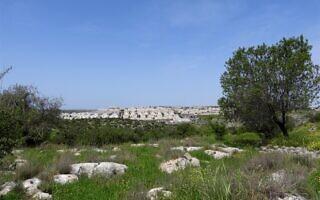 הגבעות הדרומיות של מודיעין (צילום: דב גרינבלט, החברה להגנת הטבע)