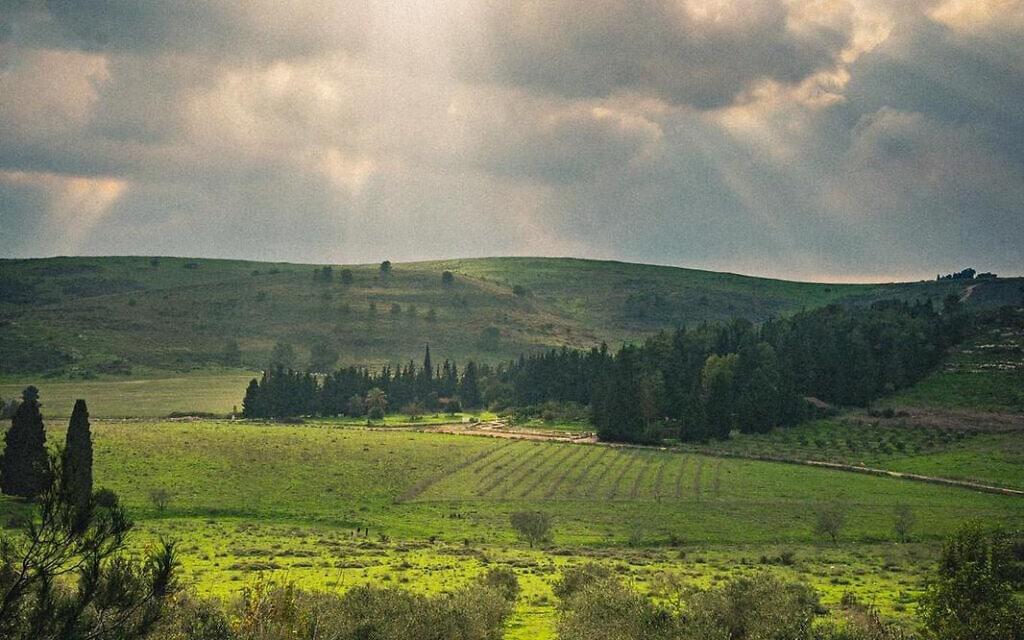 עמק השלום (צילום: מטה המאבק להצלת עמק השלום)