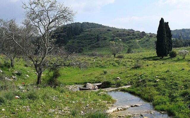 נחל מפעפע בעמק השלום (צילום: יותם יעקבסון, מטה המאבק להצלת עמק השלום)