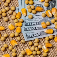 מחירי התירס והסויה עולים. אילוסטרציה (צילום: iStock)