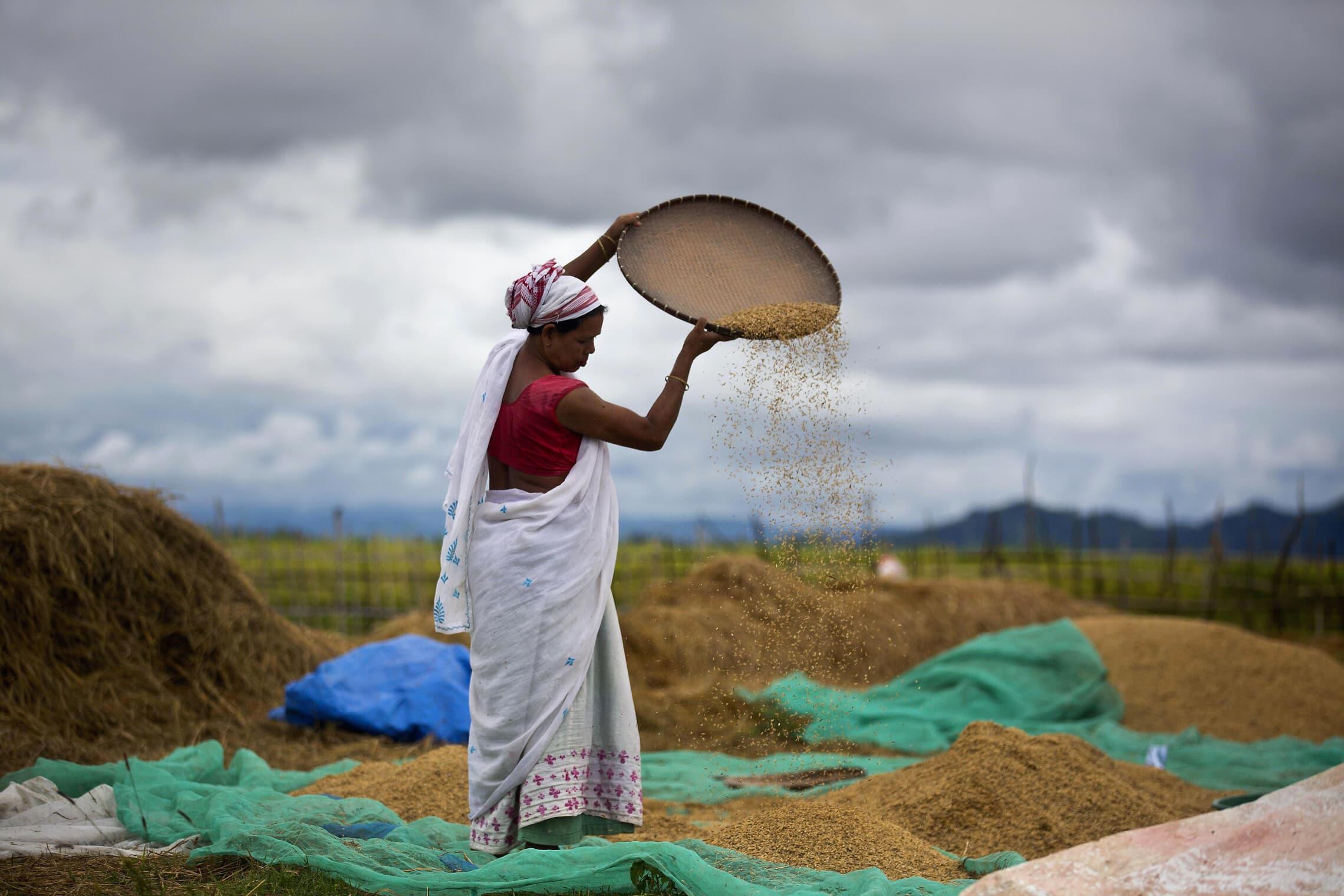 אישה העוסקת בחקלאות בהודו (צילום: AP Photo/Anupam Nath)