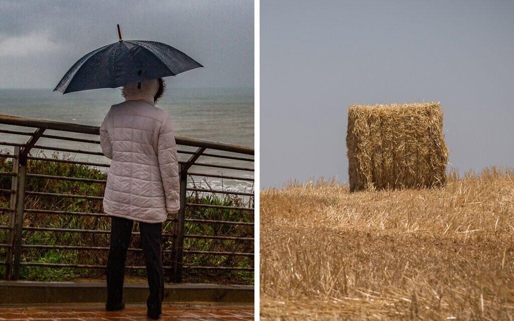 שדה חיטה בעוטף עזה וגשם בנתניה (צילום: פלאש90, מונטז')