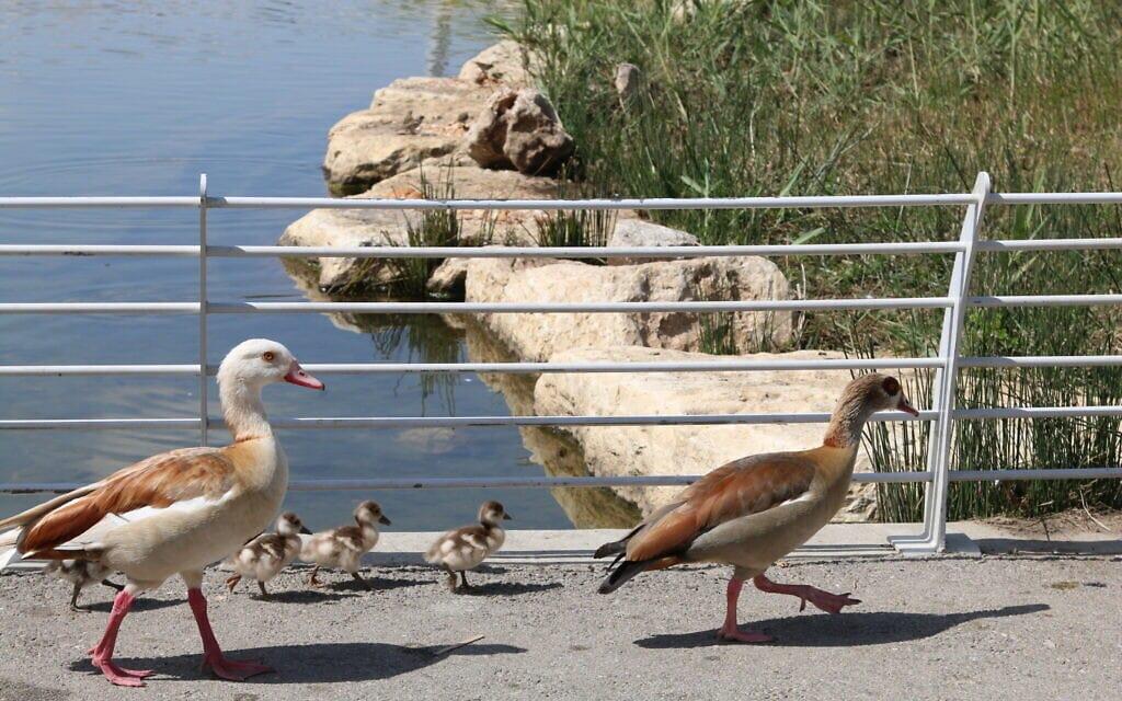 פארק הילדים בבאר שבע (צילום: שמואל בר-עם)