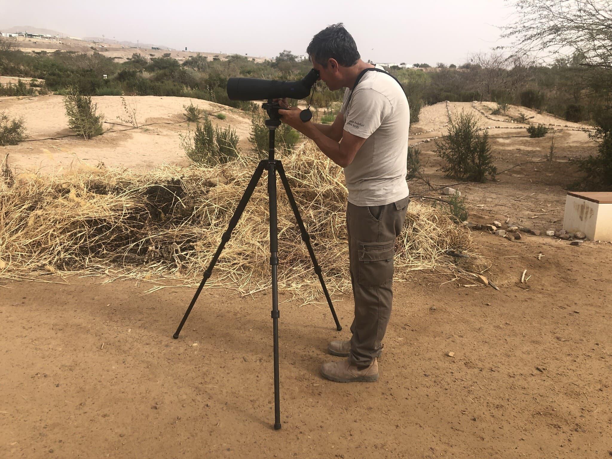 נועם וייס, מנהל המרכז הבינלאומי לצפרות באילת, מנסה לזהות את הציפורים המבקרות (צילום: סו סורקיס)