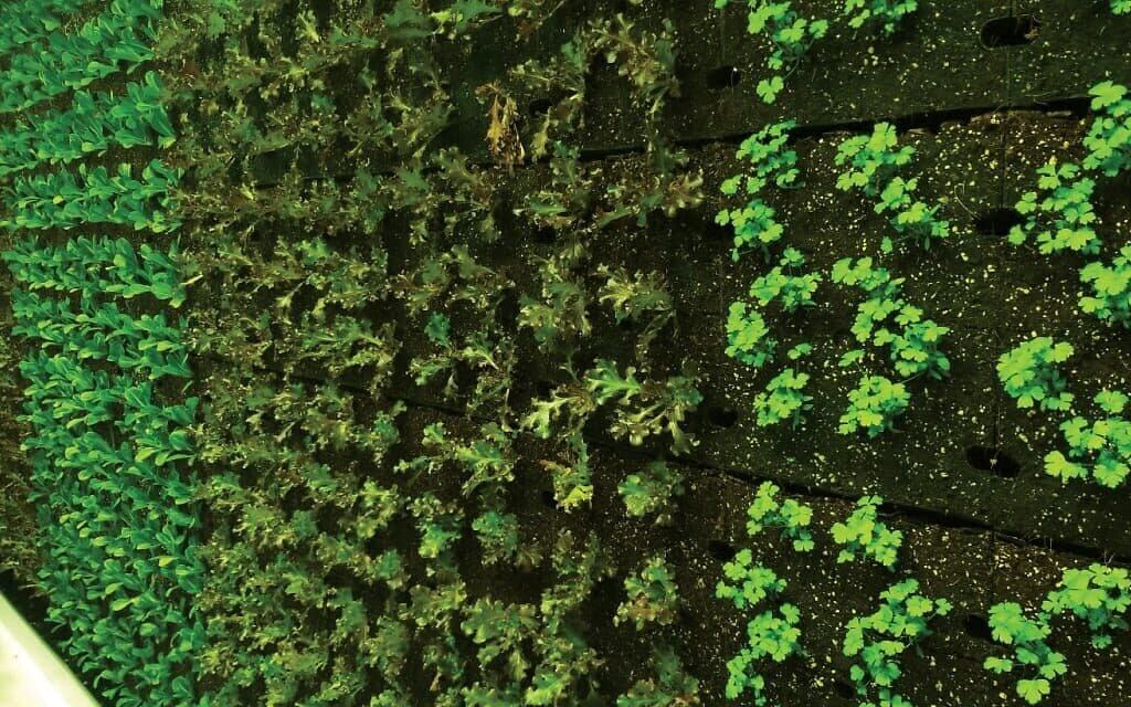 קיר ירקות אותנטי בחווה הניידת של ורטיקל פילד (צילום: Vertical Field)