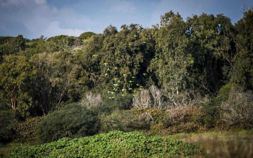 מתחם אפולוניה (צילום: רמי זאבי)