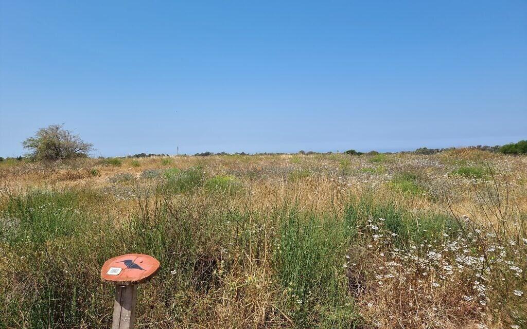 מתחם אפולוניה (צילום: אביב לביא)