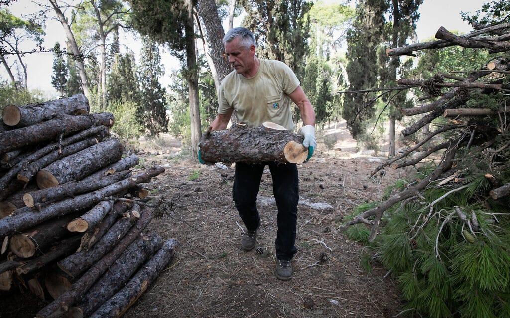 """עובדי קק""""ל עובדים על ייעור וחידוש יער מסריק, 2018 (צילום: ענת חרמוני/פלאש90)"""