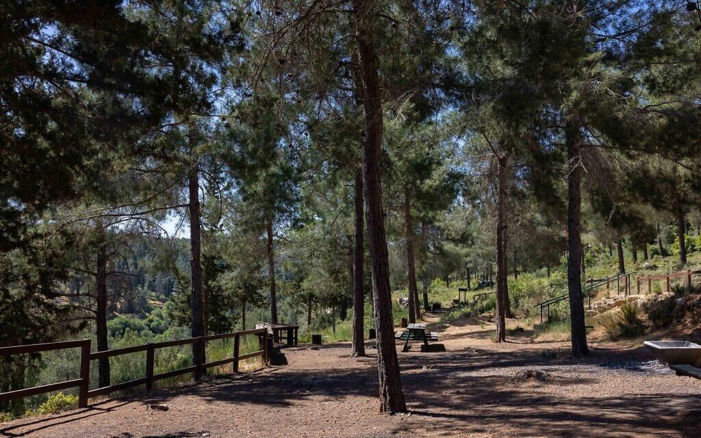 עצים בפארק מחנם בגין בהרי ירושלים (צילום: נתי שוחט/פלאש90)