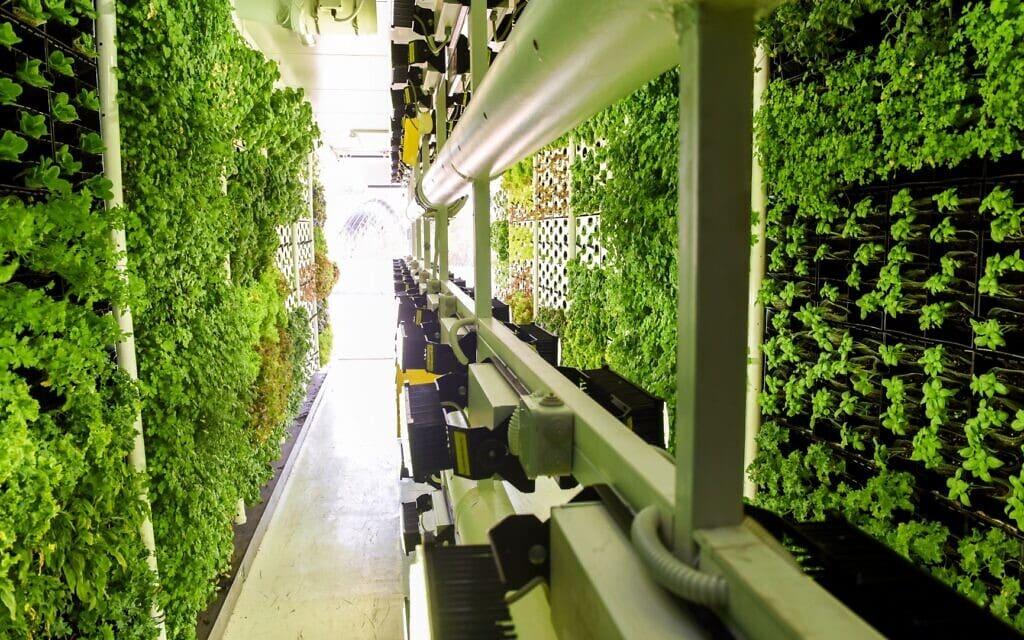 ירקות בחוות הגידול העירונית הניידת של ורטיקל פילד (צילום: Vertical Field)