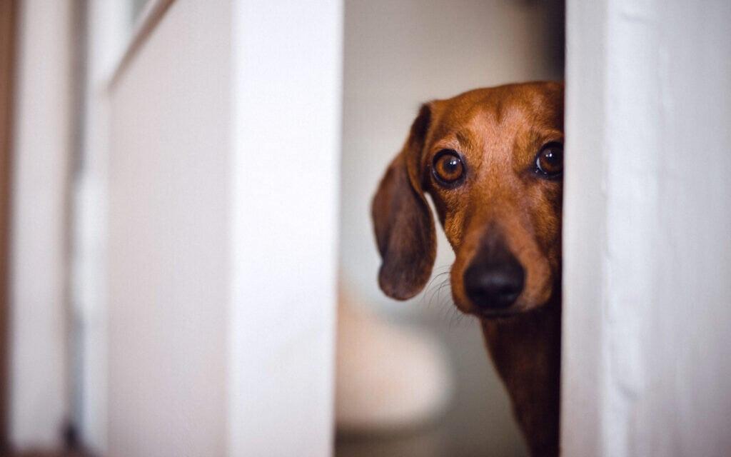 כלב מפחד, אילוסטרציה (צילום: Katarina Radonic / iStock)
