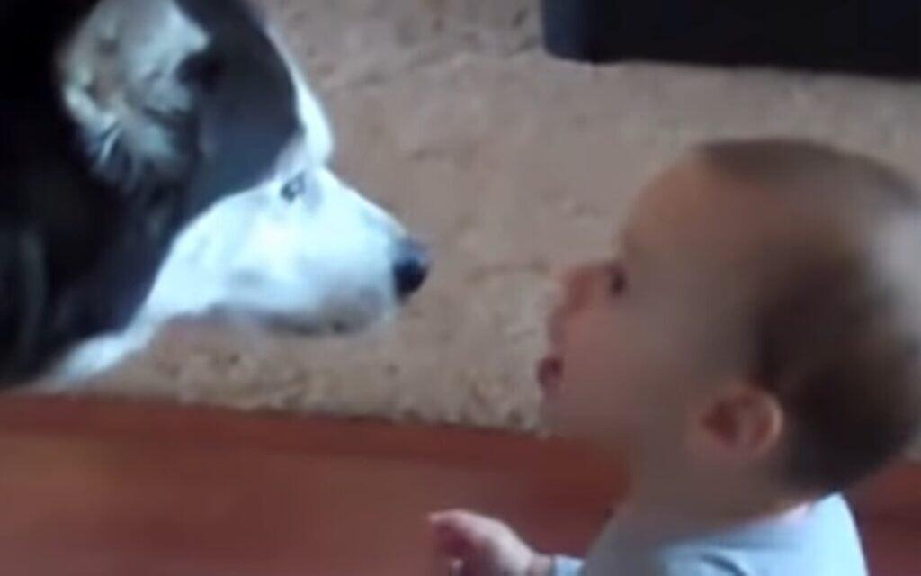 תינוק וכלב מנהלים שיחה, צילום מסך מסרטון יוטיוב של Cute Puppies