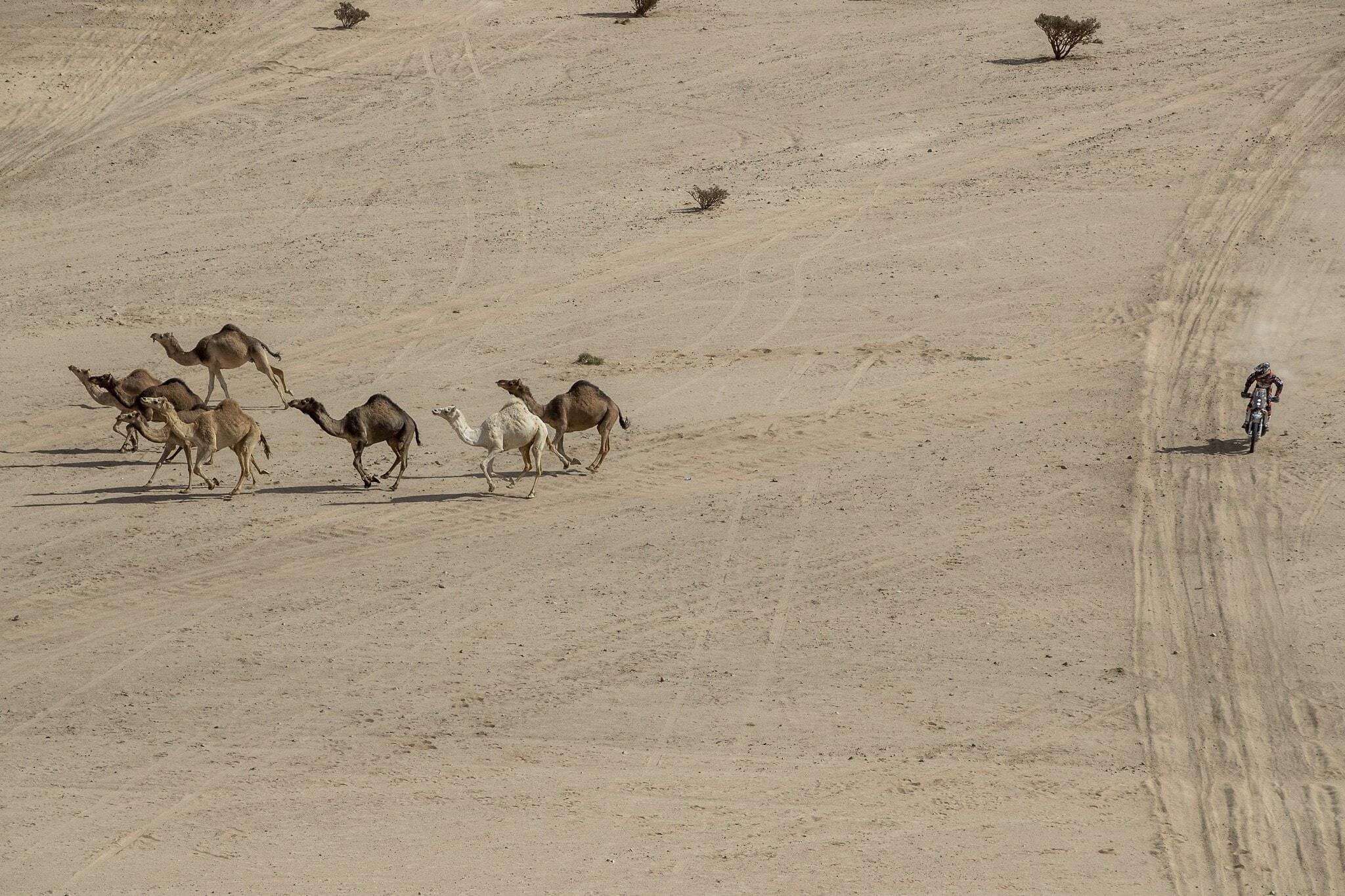 מקצה של מירוץ דקאר עובר במדבריות ערב הסעודית באזור שבו אמורה לקום העיר ניאום, 6 בינואר 2020 (צילום: AP Photo/Bernat Armangue)