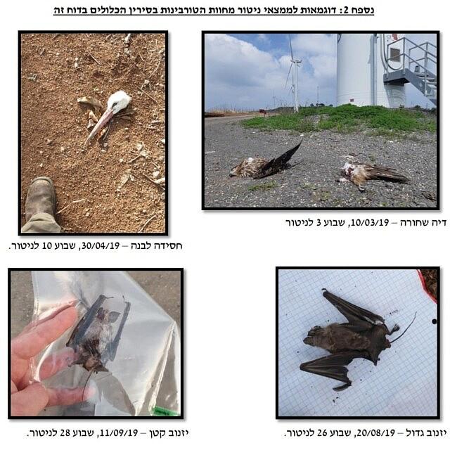 ציפורים שנקטלו מטורבינות ברמת סירין (צילום: באדיבות מאבק 2020)