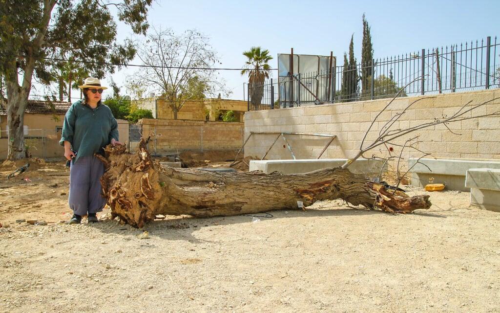 חביבה פדיה ליד העץ הכרות ליד ביתה בבאר שבע. ינואר 2019 (צילום: שחר בדולח)