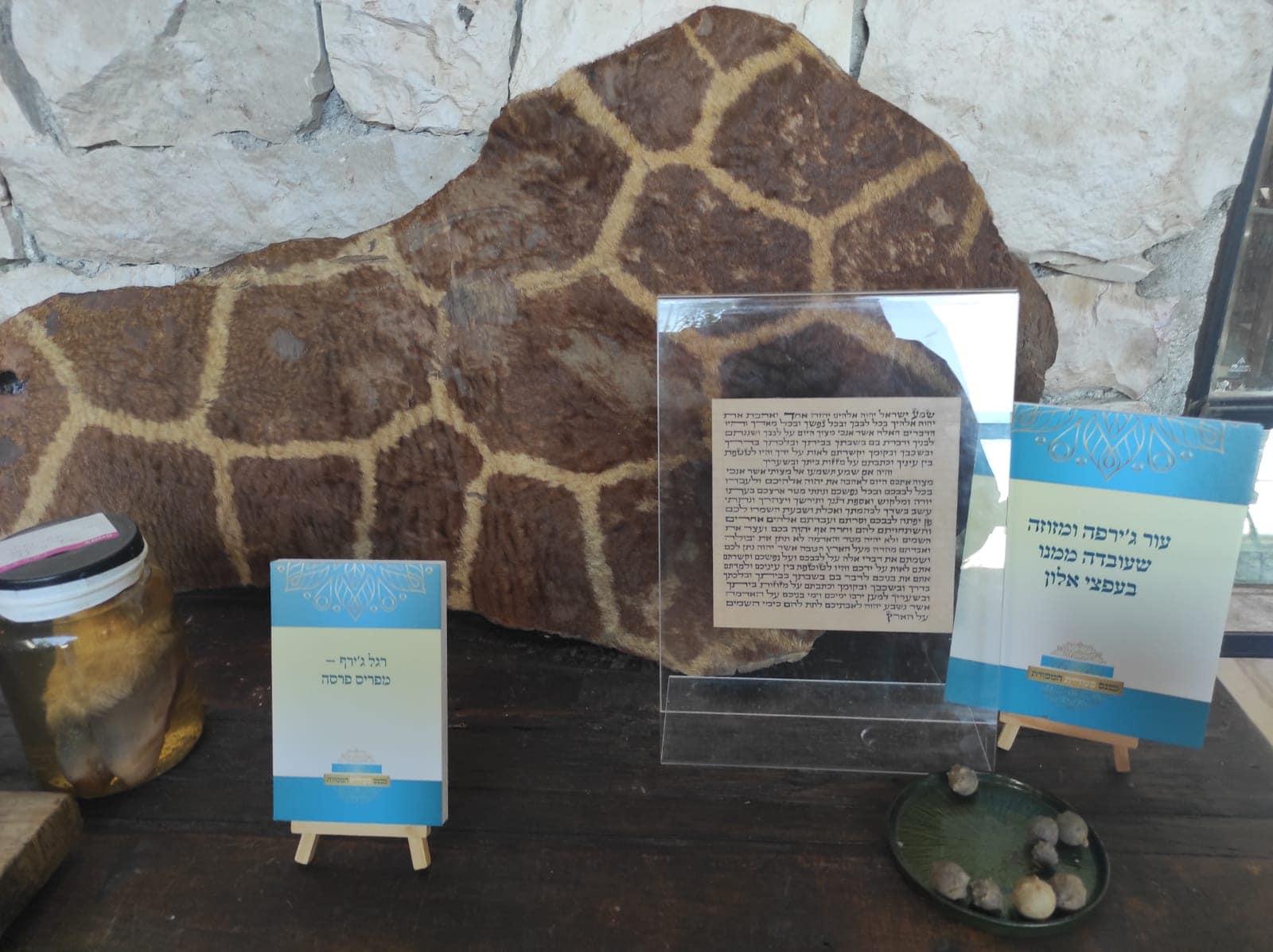 מזוזה על קלף שעובד מעור ג'ירפה (צילום: דוב מורל)