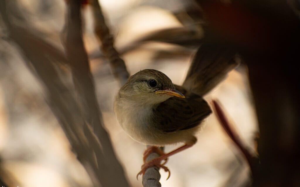 ציפור (צילום: נעמה כספי)