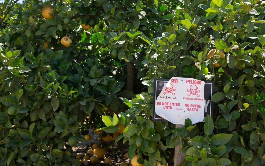 שלט המזהיר מהדברת כלורפיריפוס בפרדס תפוזים בקליפורניה ב-2012 (צילום: Jim West / Alamy)