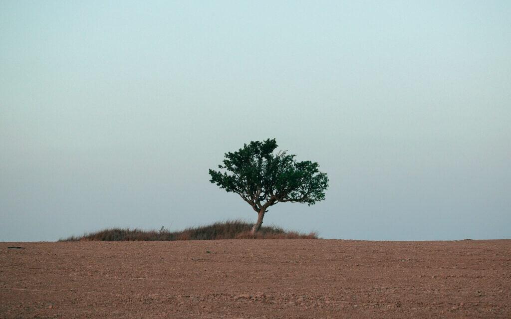 עץ (צילום: נעמה כספי)