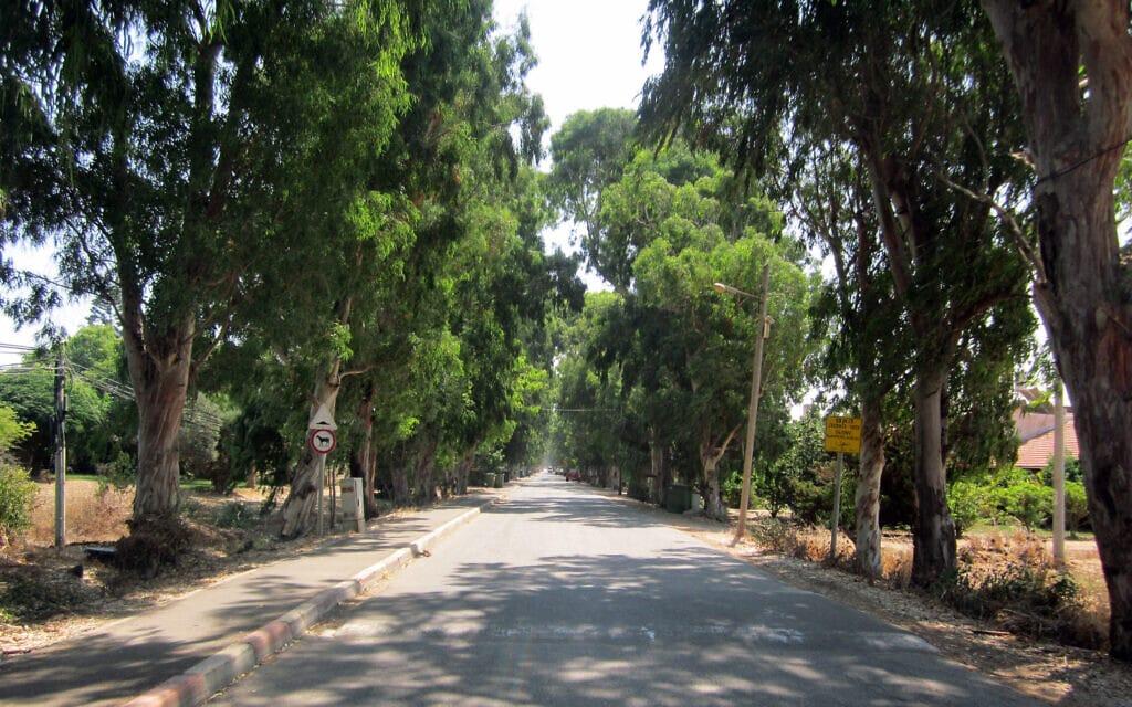 שדרת עצי אקליפטוס בבוסתן הגליל (צילום: ויקיפדיה)
