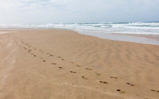 עקבות בחול על חוף ראשון לציון, ינואר 2021 (צילום: דורון הורוביץ/פלאש90)