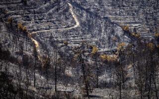 הטרסות בהרי ירושלים אחרי שרפת הענק, 18 באוגוסט 2021 (צילום: אוליבייה פיטוסי/פלאש90)
