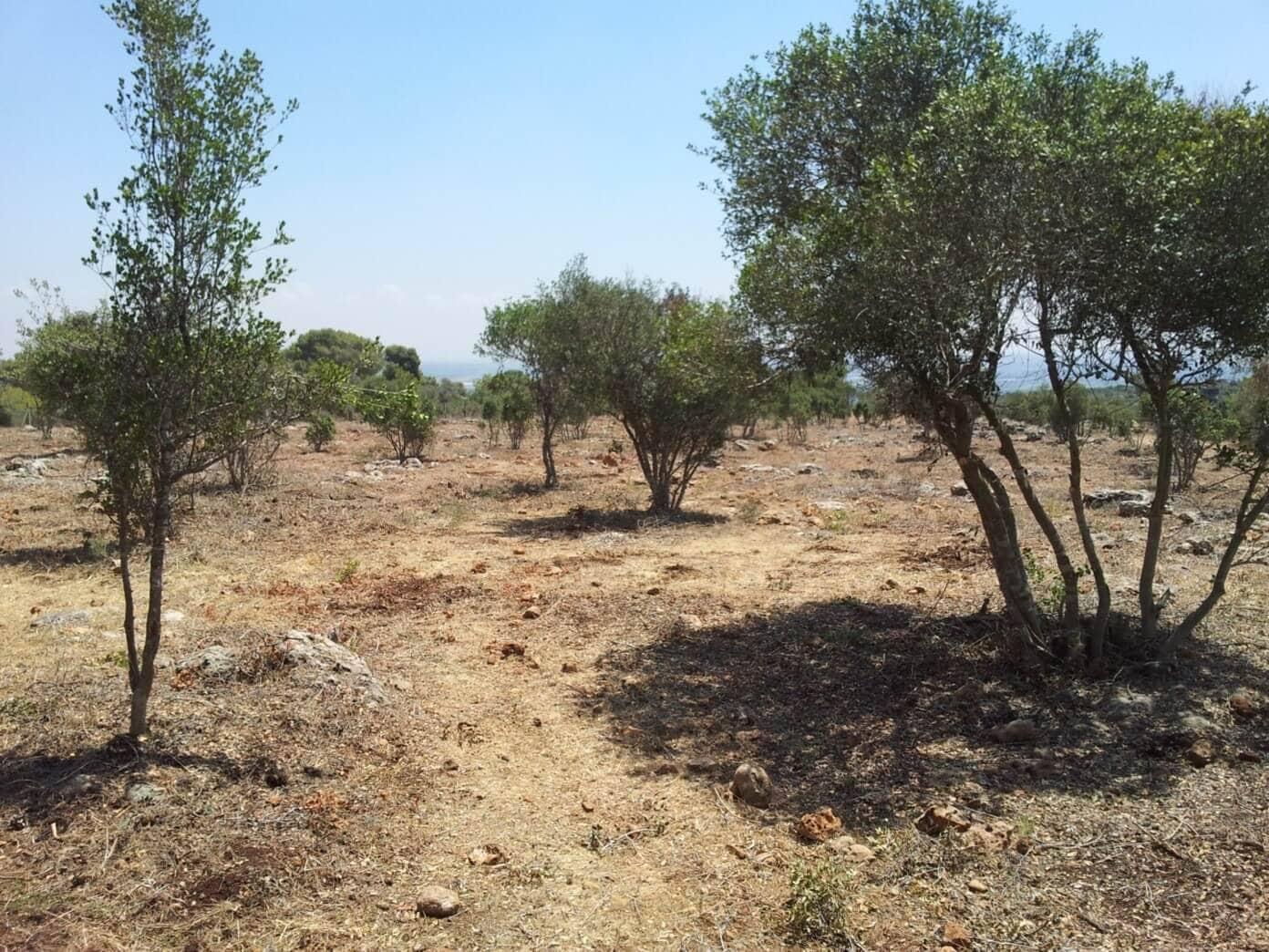 אזור חיץ למניעת שרפה באזור רמת הנדיב (צילום: אתר רמת הנדיב)