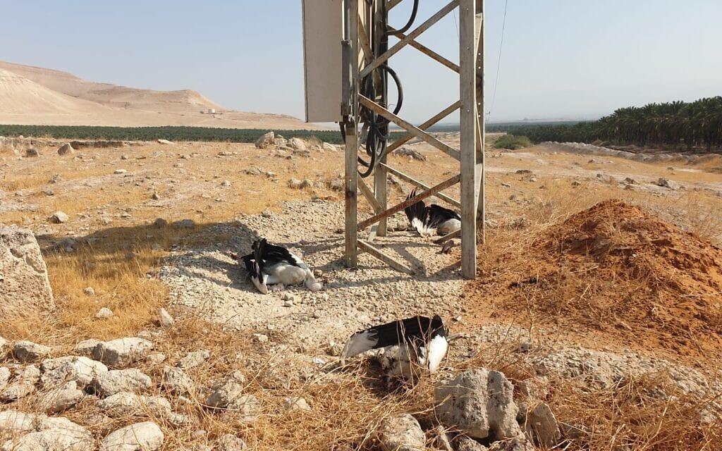 חסידות שחושמלו למוות לרגלי עמוד חשמל בבקעת הירדן, אוגוסט 2021 (צילום: יוגב קרסנטי)