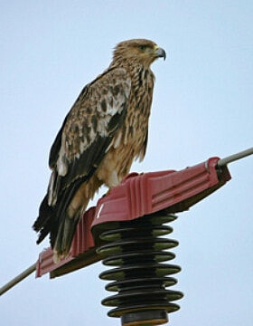 מכסה פלסטיק על עמוד חשמל מגן על הציפורים מהתחשמלות. אילוסטציה