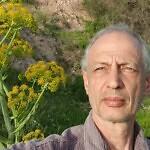 אמיר חלמיש