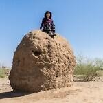 Ayla Matalon